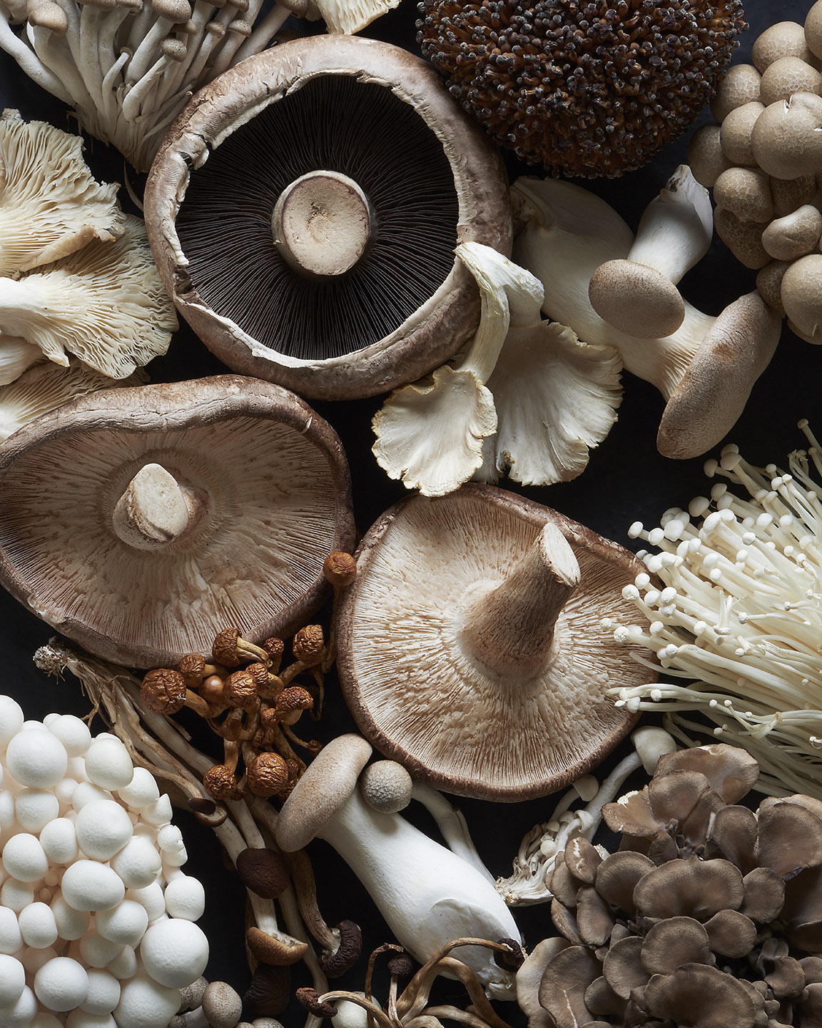 Raw Mushrooms by Matthew Roharik Editorial Food Photographer Los Angeles