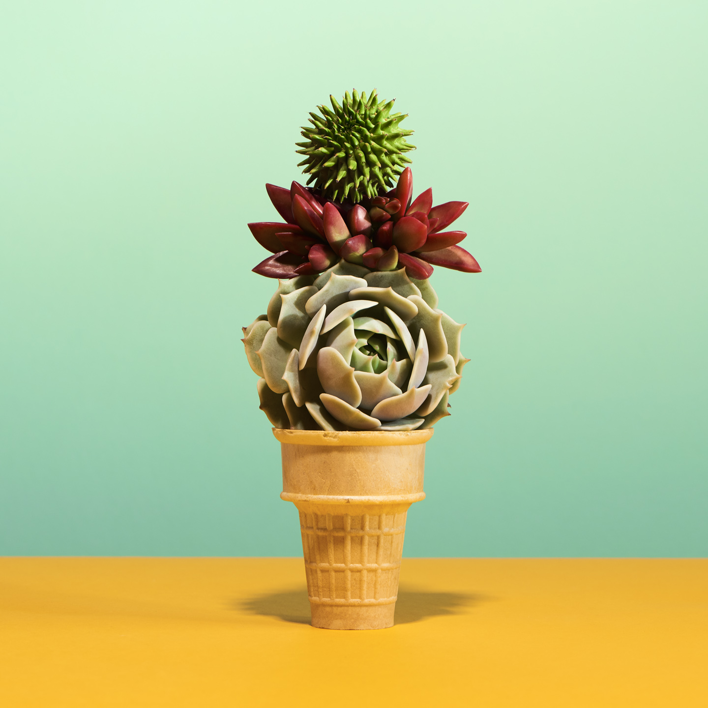 Sultry Succulents by PDN Photo Annual 2017 Winner by Matthew Roharik Los Angeles Still Life and Product Photographer